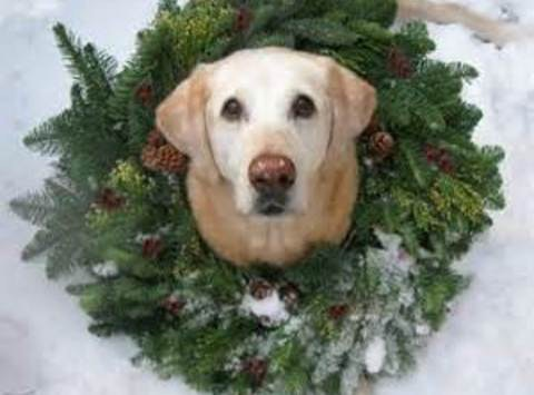 Lapeer's Adoptable Animals Holiday Fundraiser