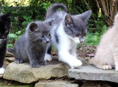 Culpeper Feline and Friends