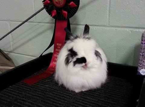 Rompin' Rabbits and Cuddly Cavy 4-H Club Fall Fundraiser