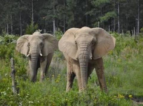 Support the Elephants at the Elephant Sanctuary