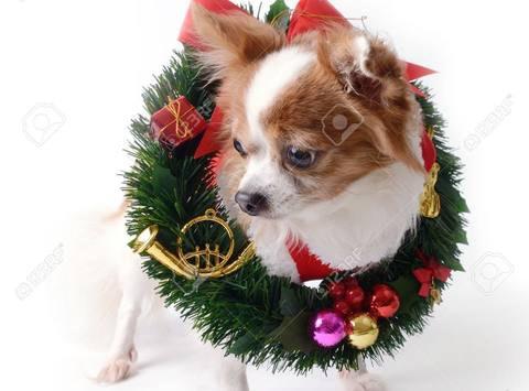 Bridges to Safety Christmas Wreath fundraiser
