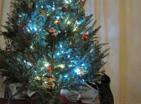 Feline Friends Holiday Fundraiser