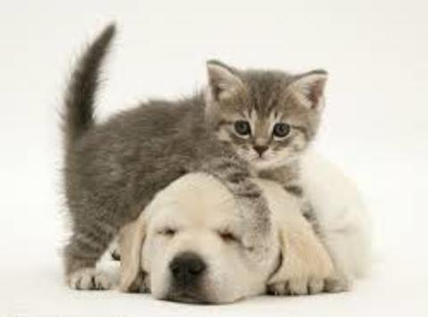 Pet Health Community Outreach