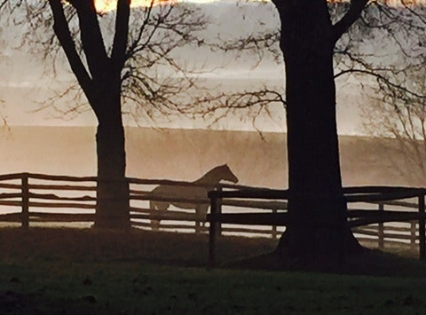 Providing the gift of horses to caregivers (Dropping the Reins)