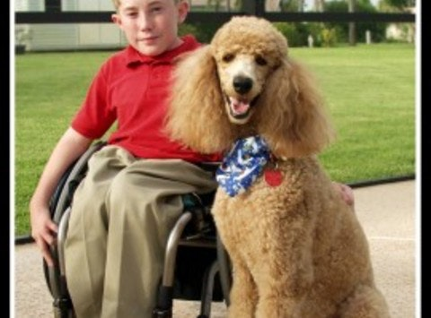 Canines for disabled kids donation fund