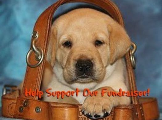 animals & pets fundraising - Guiding Eyes For The Blind Erie Puppy Raising Program