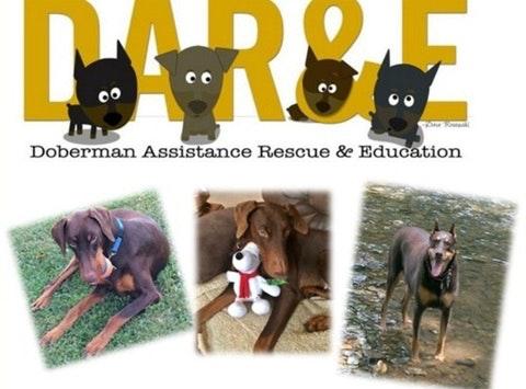 DAR&E Wreath Fundraiser - Help save a doberman