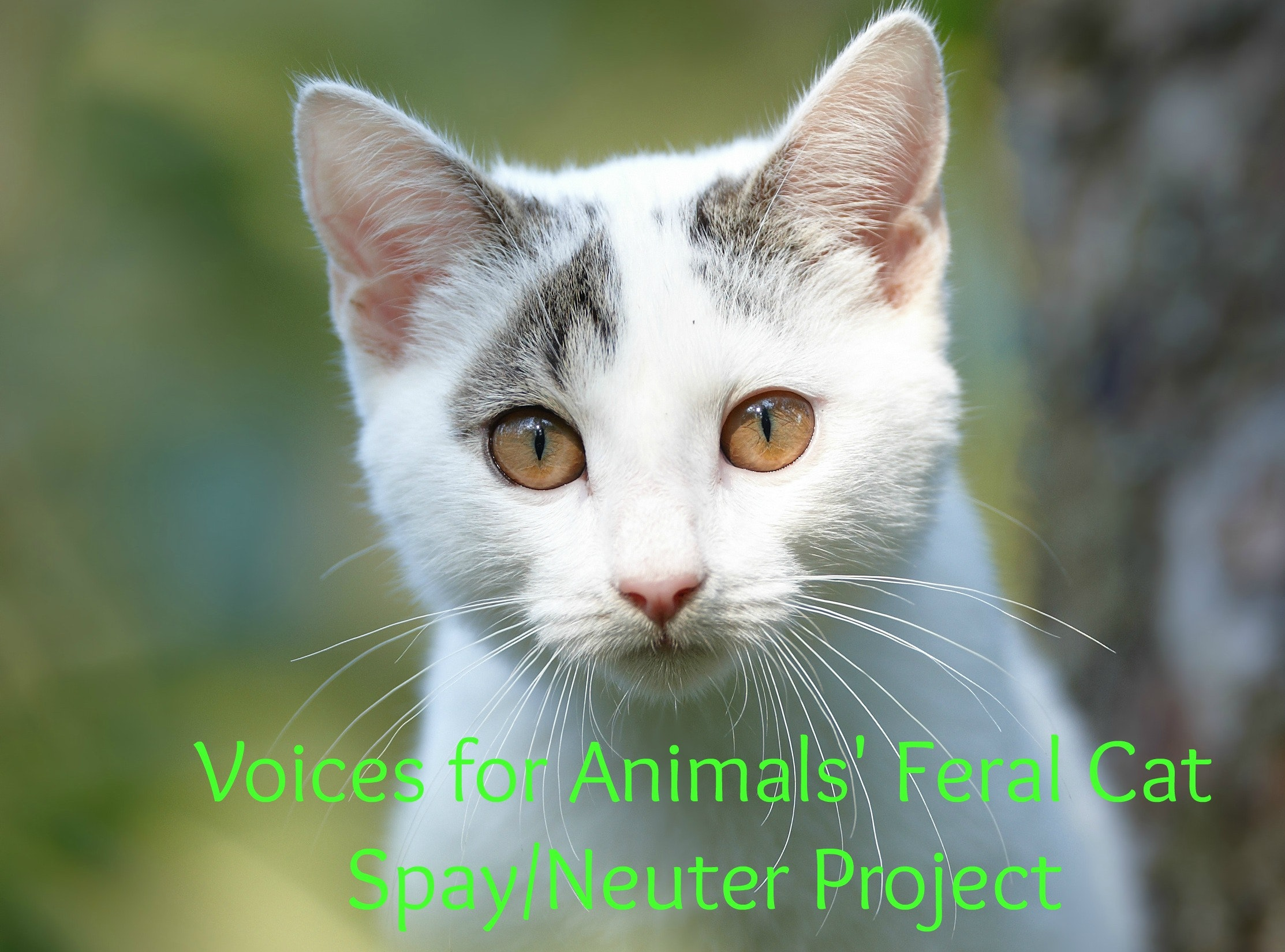 Voices For Animals
