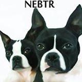 NEBTR  - Northeast Boston Terrier Rescue