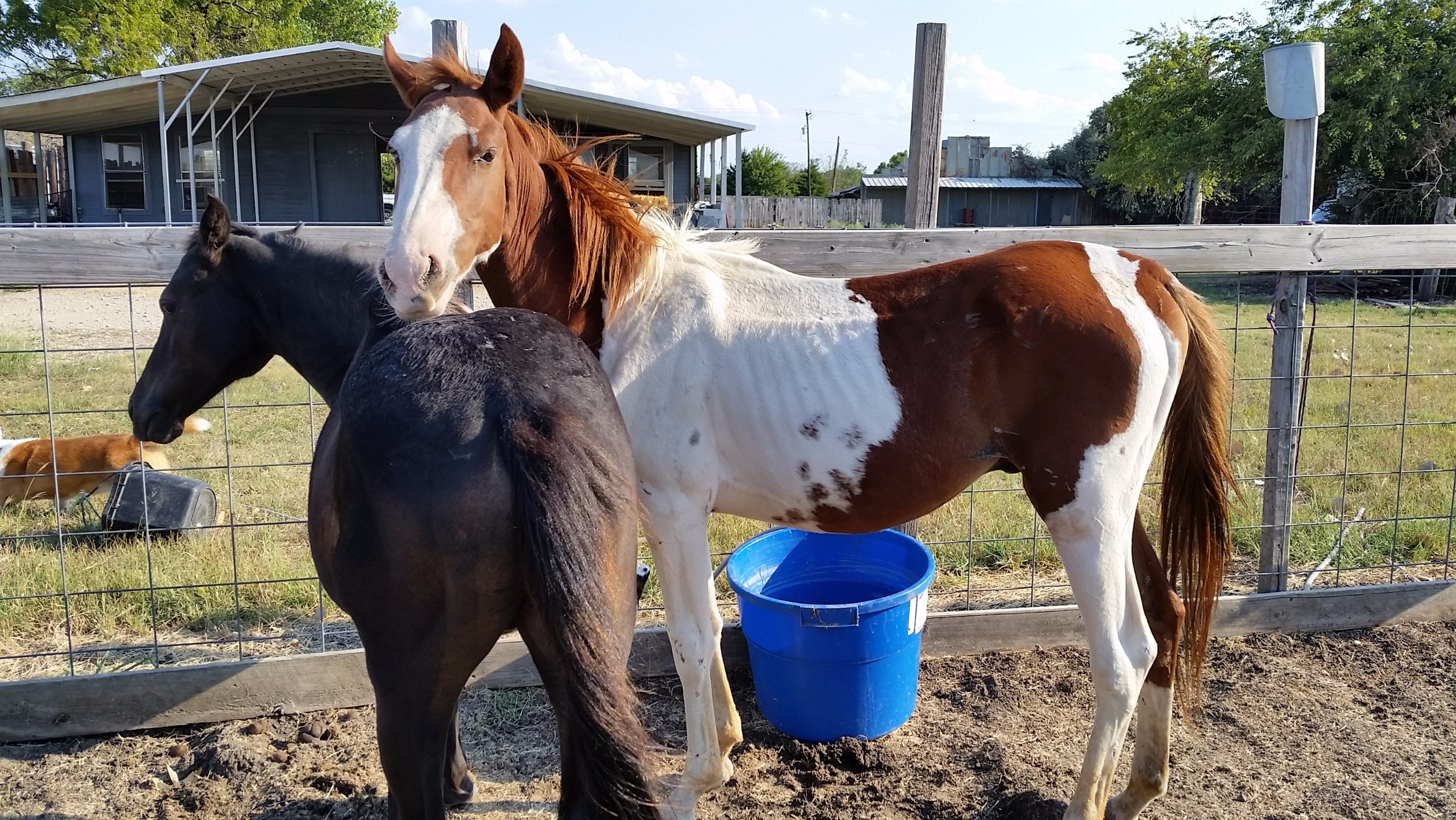 Christmas Hope for Unwanted Horses & Dogs