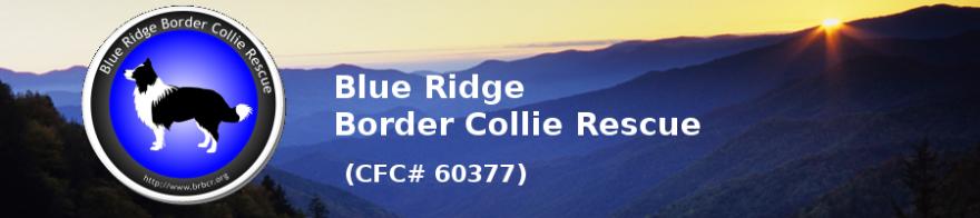 Blue Ridge Border Collie Rescue