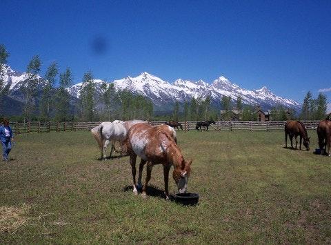 Jackson Hole Horse Rescue