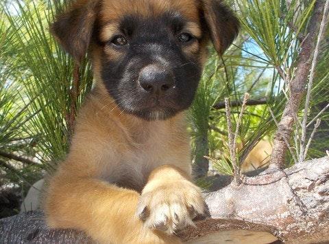 Caribbean Animal Rescue Effort - Eleuthera Bahamas - The Clinic