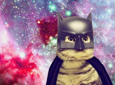 Laura's Cat-O-Rama Fundraiser