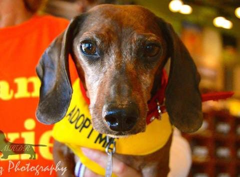 Mile High Dachshunds Rescue