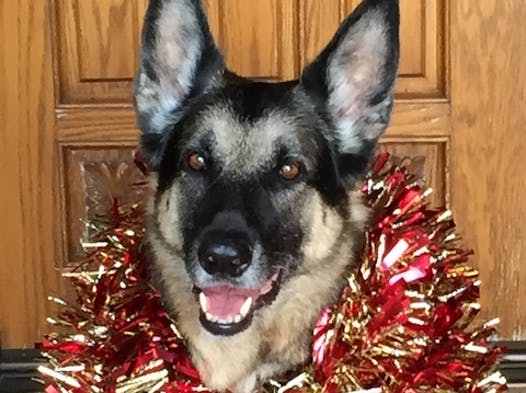 non-profit & community causes fundraising - German Shepherd Rescue of OC