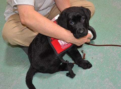 animals & pets fundraising - Prison Pet Partnership