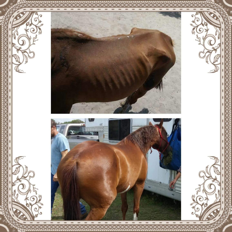 Hope Equine Rescue