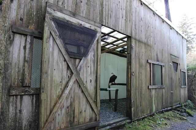 Alaska Raptor Center