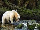 1480349144asw spirit bear sew dsc3696 web