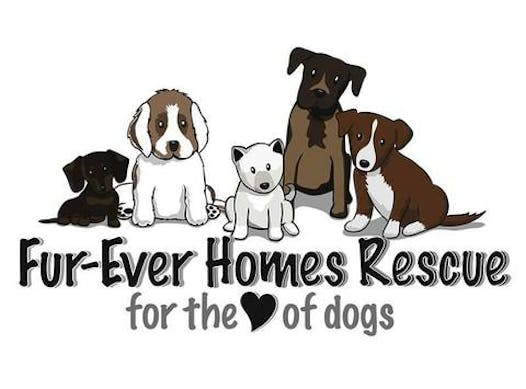 other organization or cause fundraising - FUR-EVER HOMES RESCUE SOCIETY