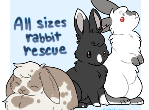 All Sizes Rabbit Rescue