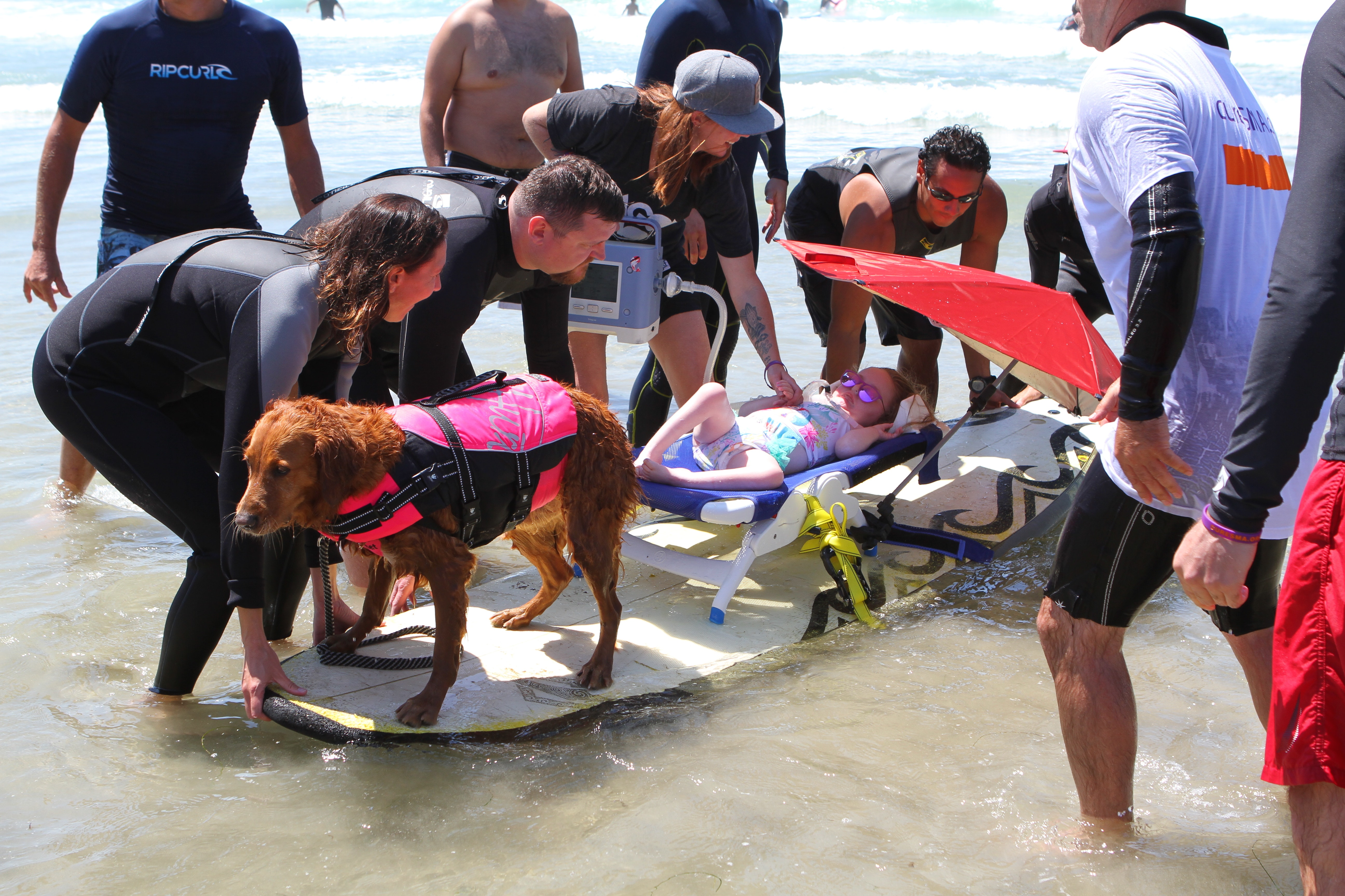 Ricochet, the surfing dog