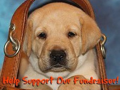 Guiding Eyes For Blind Erie Puppy Raising Region