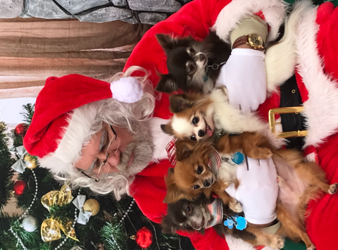 animals & pets fundraising - APAC Dog Rescue, Temple Texas