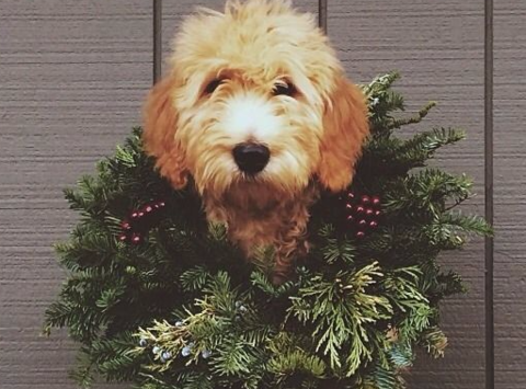 Wreaths for Rescue