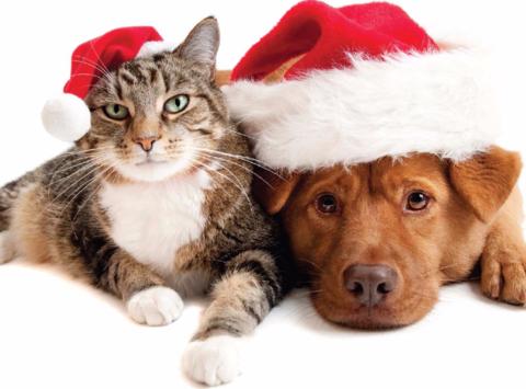animals & pets fundraising - New Beginnings Season of Giving Fundraiser