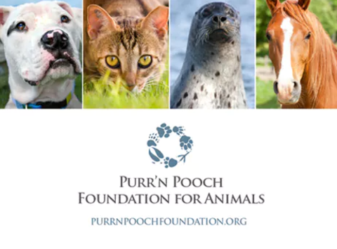 Purr'n Pooch Foundation For Animals Holiday Wreath Sale