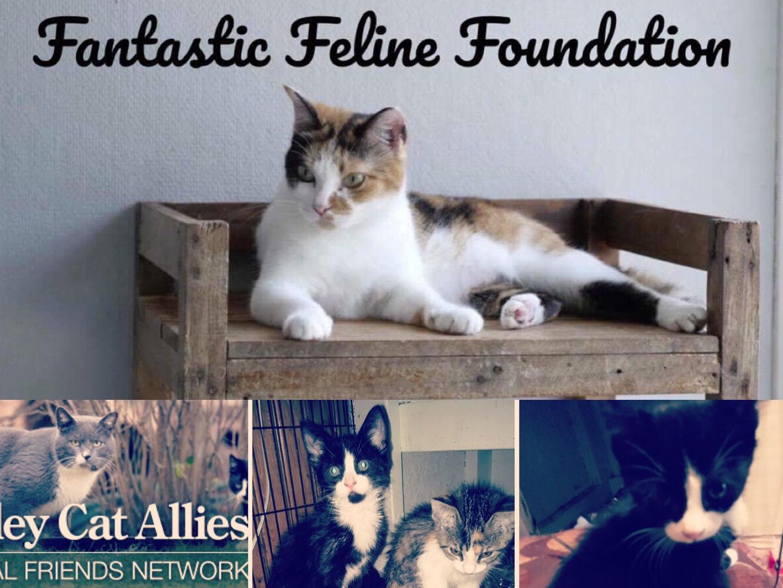 Fantastic Feline Foundation