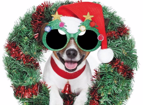 animals & pets fundraising - West Coast Animal Rescue
