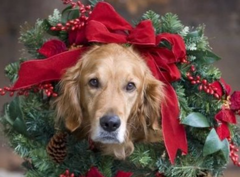 animals & pets fundraising - The Rescue Inn's Pines for Pups