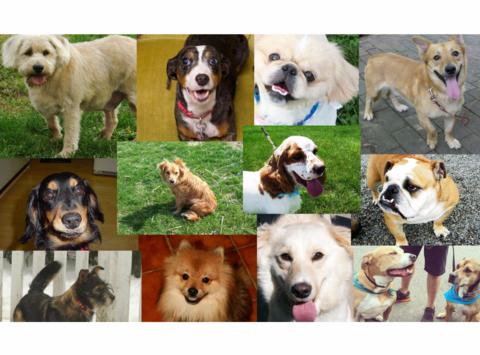 animals & pets fundraising - Putnam Pet Pals Holiday Greenery Sale