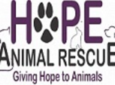 animals & pets fundraising - Hope Animal Rescue of Iowa