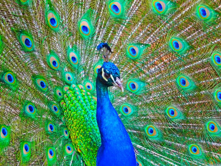 Dorothy Peacock School