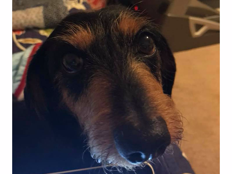Tennessee Dachshund Rescue