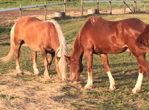 Help Founder Rehab Ranch Fill the Hay Barn for Winter