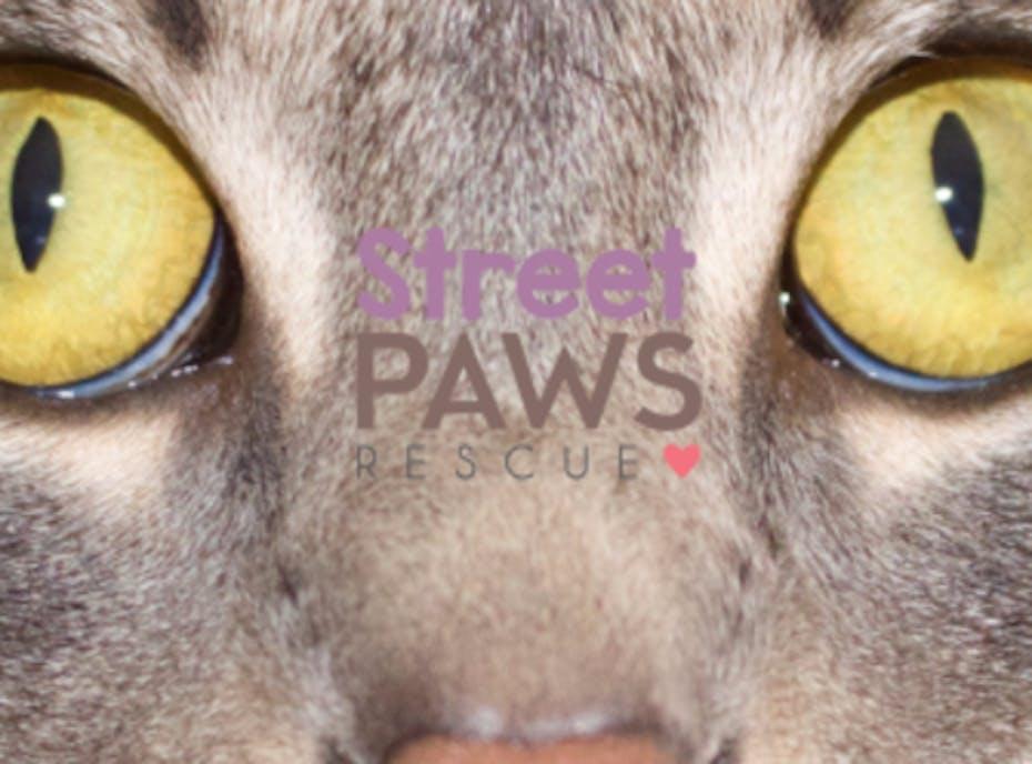 Street Paws Rescue