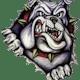 Ionia Bulldogs