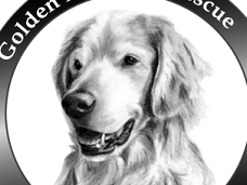 Golden Retriever Rescue of Southern Maryland
