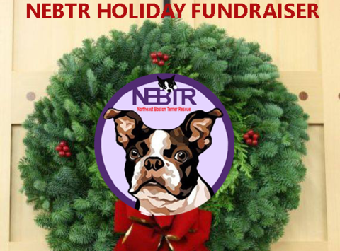 non-profit & community causes fundraising - Northeast Boston Terrier Rescue Holiday Fundraiser