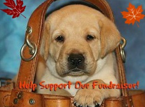 animals & pets fundraising - Guiding Eyes For The Blind Erie Region