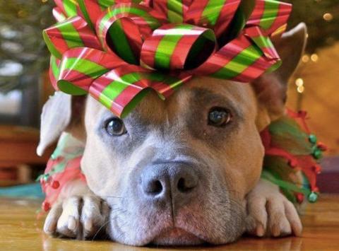 animals & pets fundraising - NovaStar Animal Rescue