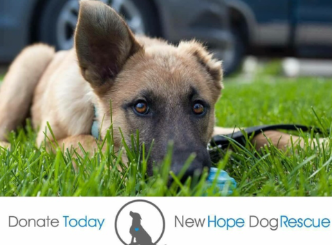 animals & pets fundraising - Fundraiser for New Hope Dog Rescue
