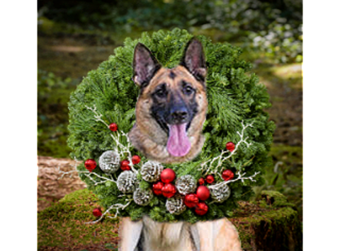 GERMAN SHEPHERD RESCUE OF OC HOLIDAY FUNDRAISER