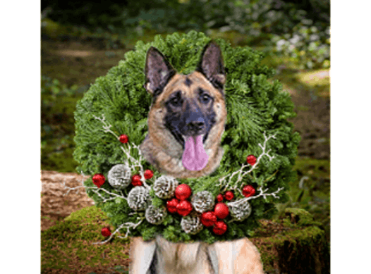 animals & pets fundraising - GERMAN SHEPHERD RESCUE OF OC HOLIDAY FUNDRAISER
