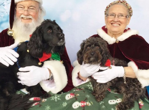 New Beginnings for Animals: Wreaths for Paws